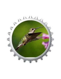 Humming-Bird 2